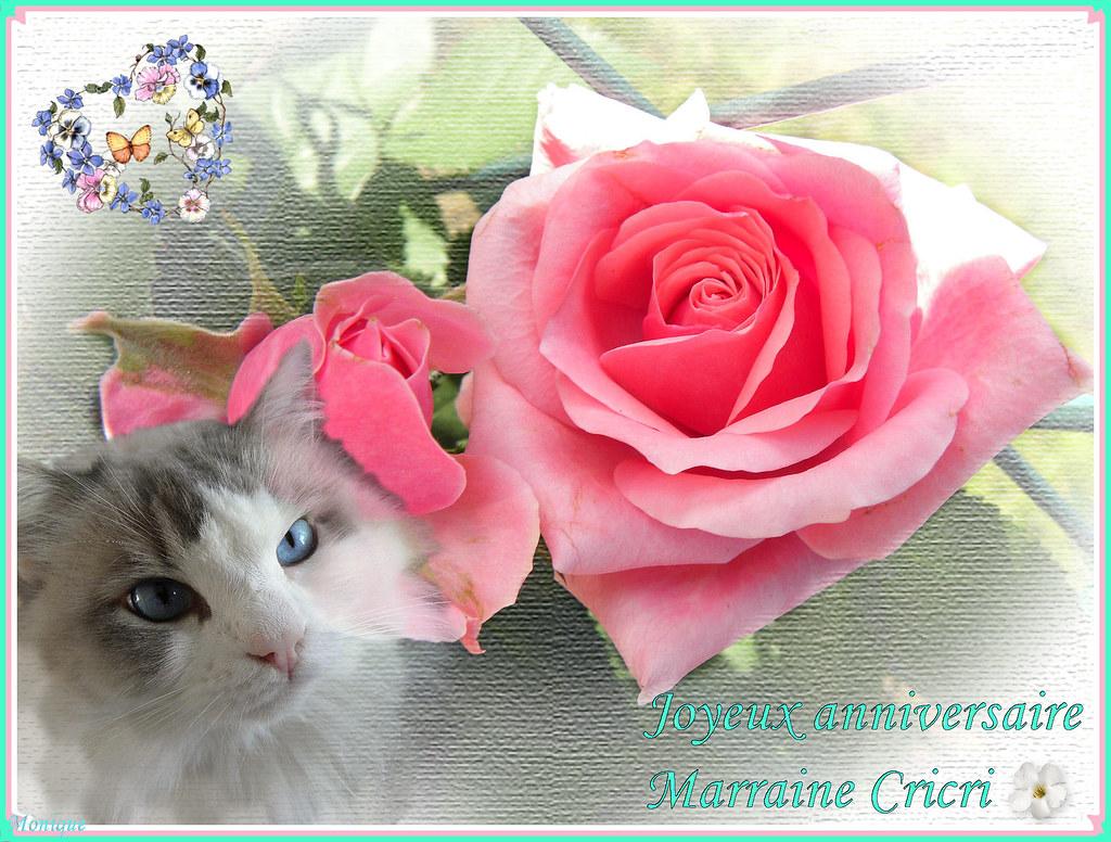 Joyeux Anniversaire Christine C Est Avec Mon Teddylou Qu O Flickr