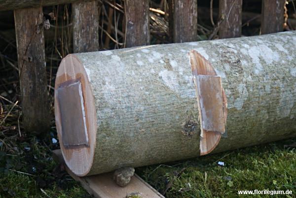 Die beimpften Holzstück im Schatten
