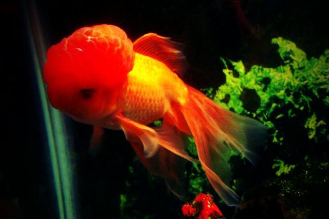 fish brain - photo #21