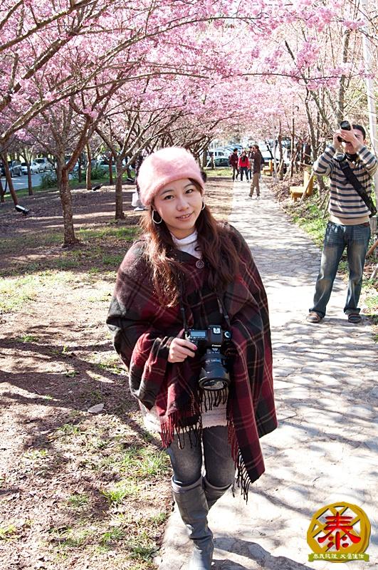 02-11武陵農場全民瘋櫻花A (18)
