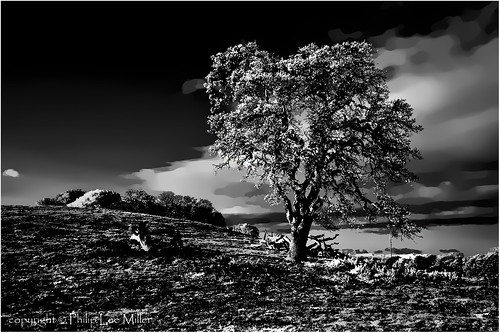 california bw nature grass clouds landscape d70 infrared oaktrees topazclean silverefex stanfordweekendacres