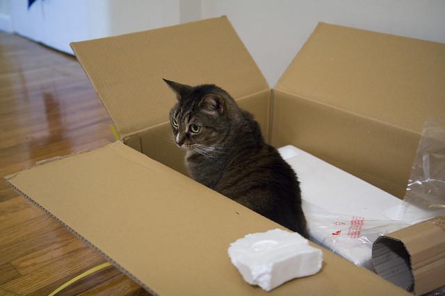 365.175 Cat Trap
