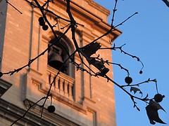 Madroño y torre de catedral