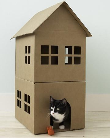 cats&cardboard_008