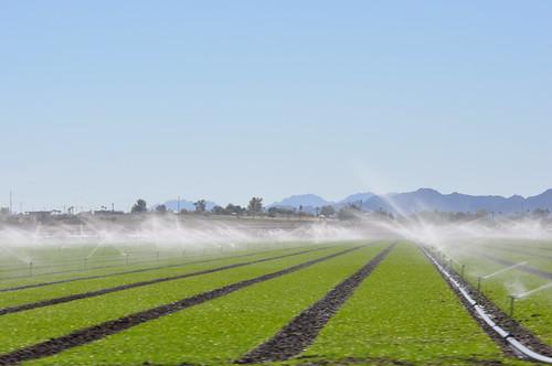 farming az farms welton weltonaz pamelaschreckengost pamschreckcom traveling55