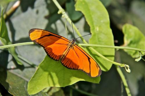 Butterfly Garden 02