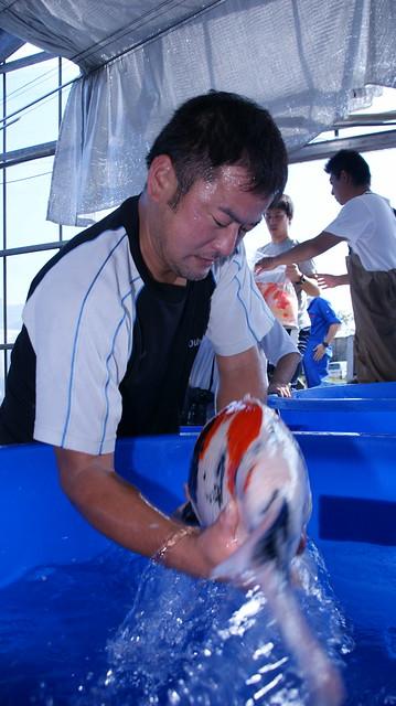 Okawa handling Koi