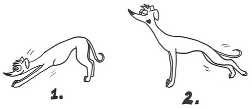 Comic-Whippet-Yoga