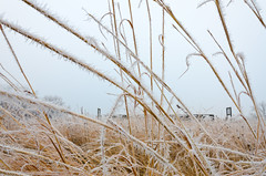 Frosty Grass Foreground D7K-5545.jpg by Mully410 * Images