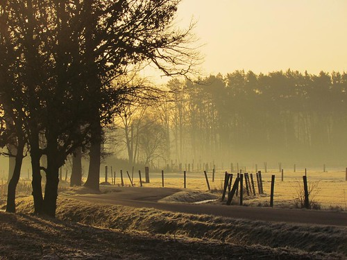 morning trees winter nature sunrise wow landscape bomen natuur ochtend landschap zonsopgang wowhalloffame herselt flickrbronzeaward fotodominic