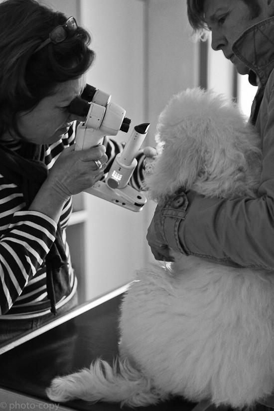 oftalmoscoop