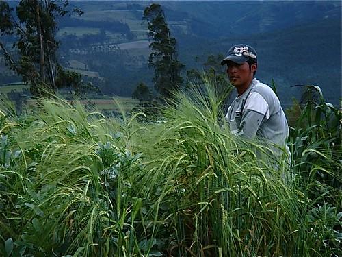 cotacachi-organic-farm