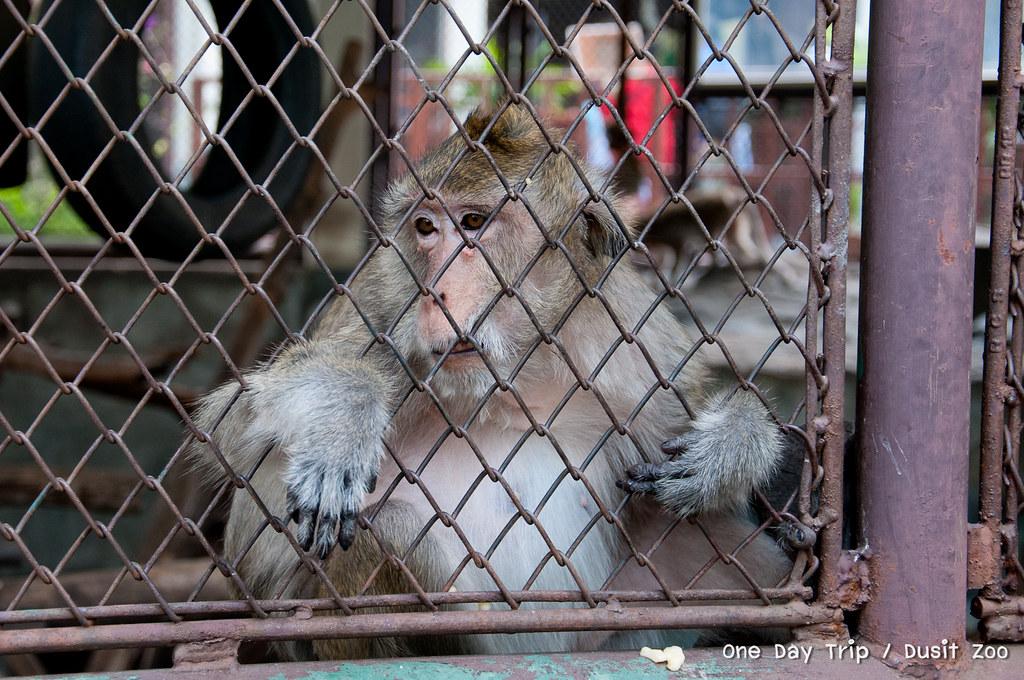 Dusit zoo - ลิง