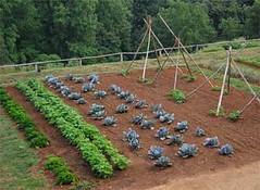 vegetable-garden-start