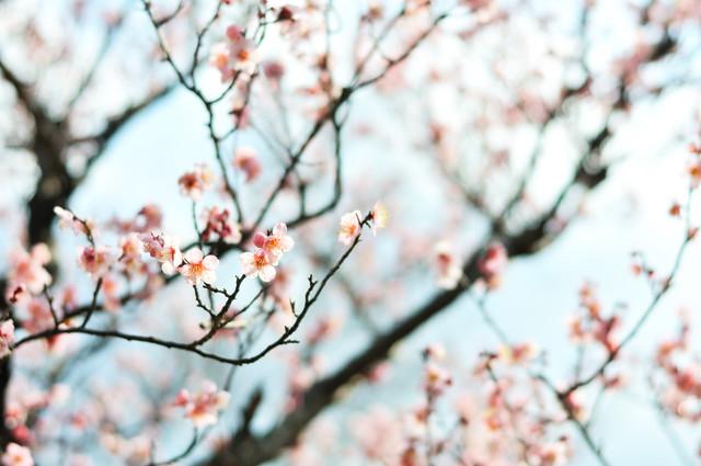 Blue Sky, Pink Flower