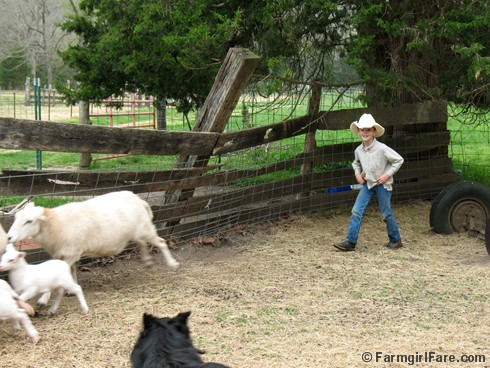 Little sheep wrangler 2 - FarmgirlFare.com
