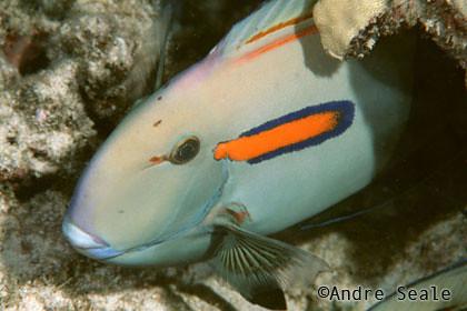 Best-snorkel-Ahihi