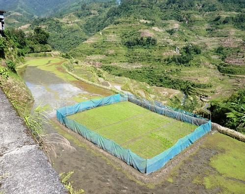 Luzon-Banaue (64)
