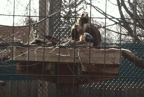 Vultures at the Toledo Zoo