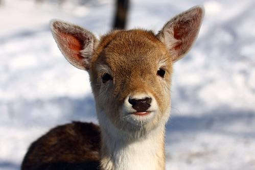 Cute animal, Soooooo Cute