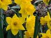 Blumenbeet bei der Kaplanei Mariazell (Photo No. 3) / © Marco PETER