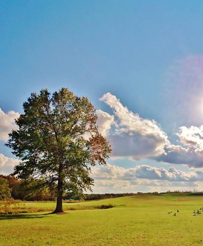sky tree landscape hill hobbit