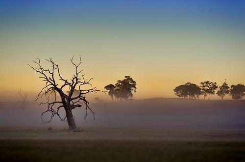 sky mist colour tree fog rural sunrise landscape photography flickr farm country hill australia victoria colourful hdr heathcote paddock nikond90 nikonafnikkor50mmf18d northernhighway raychristy