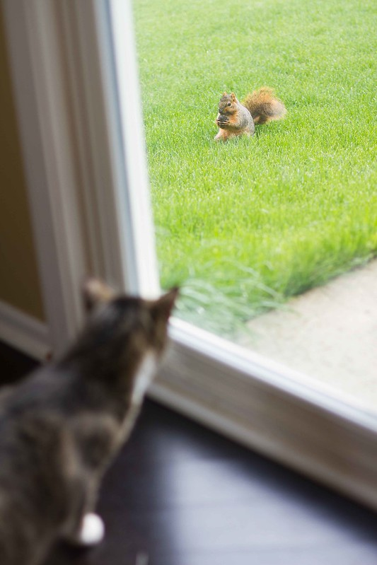 SQUIRREL!