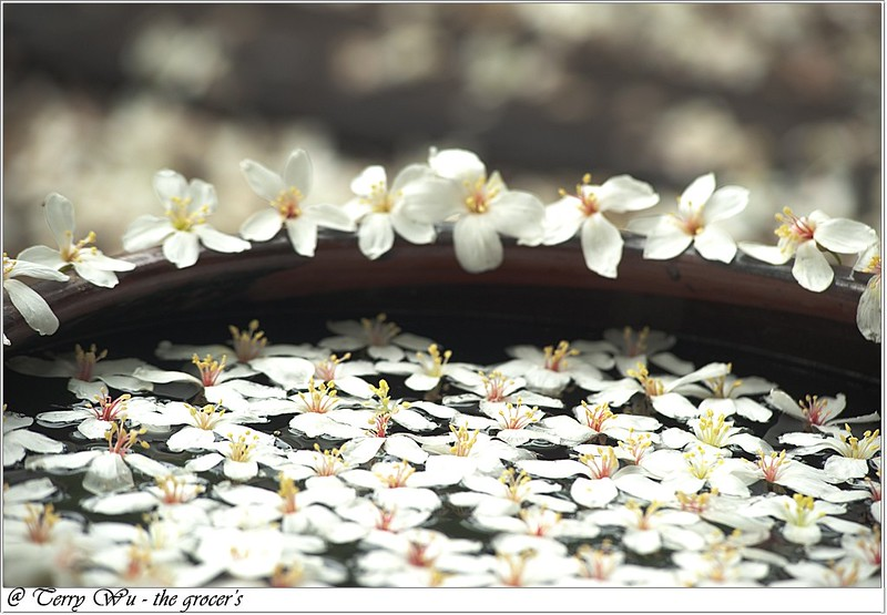 2012-04-19 挑水古道桐花-12