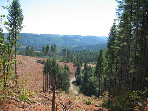 usa washington unitedstates biking mountainbiking capitalforest greenline6
