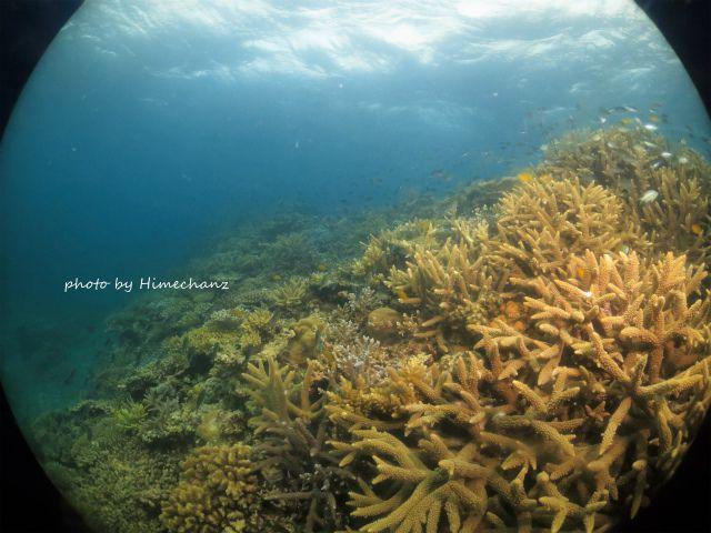 極上サンゴに癒やされて♪