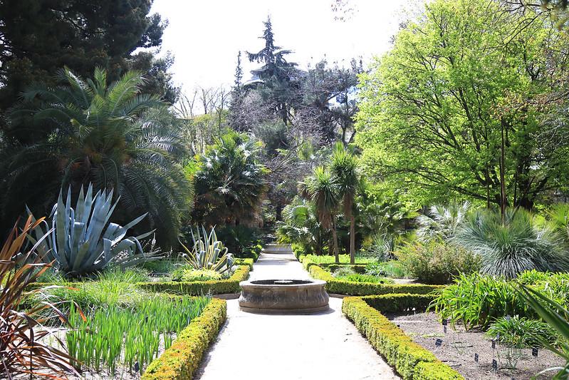 allée du jardin botanique de madrid