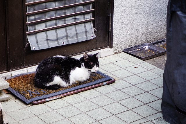 Today's Cat@2016-06-02