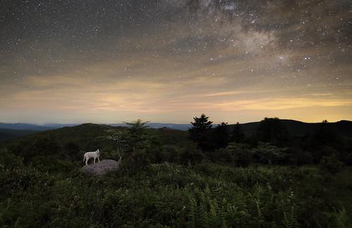 longexposure dog stars virginia petey composit graysonhighlands canoneos6d tokina1628f28