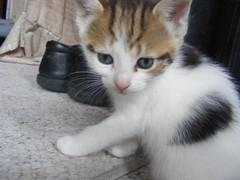 Baby kittens 177