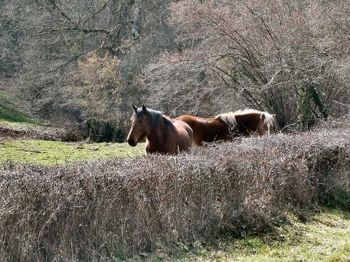 Horses near Chez Marcou