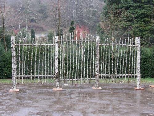 Contorted chestnut flowering almond birch picket fence for Garden ranch ymca pool