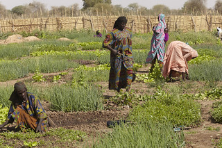 Chad Food Crisis: a market garden helps provide income and food security