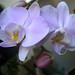 20120310_orkideak eta landareak-5