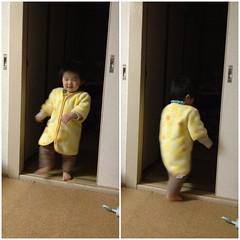 出たり入ったりするとらちゃん(2012/3/13)