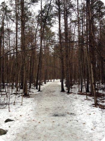 Jack Pine Trail