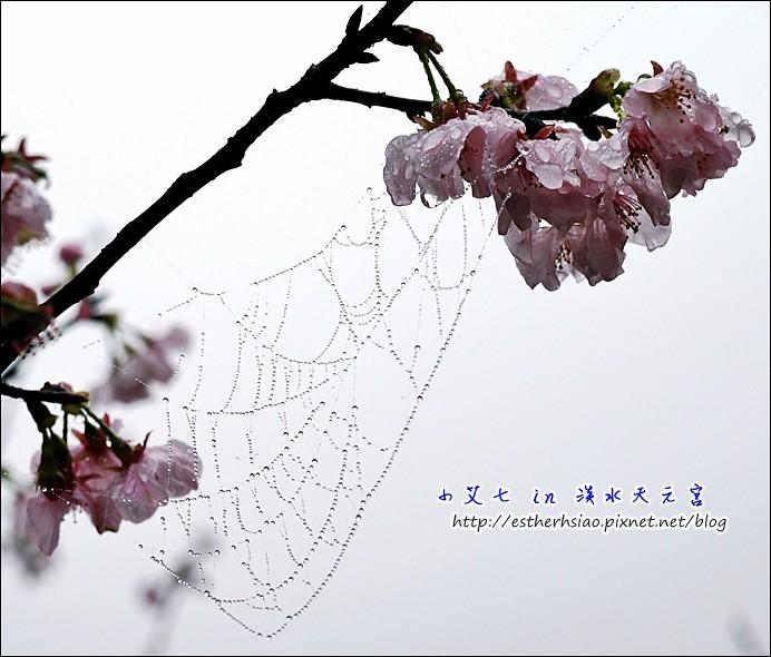 5 蜘蛛網