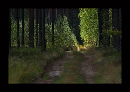 Forest light by inga_art