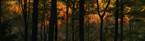 autumn panorama ny fall silhouette composite forest fallcolors vestal hugin jonespark