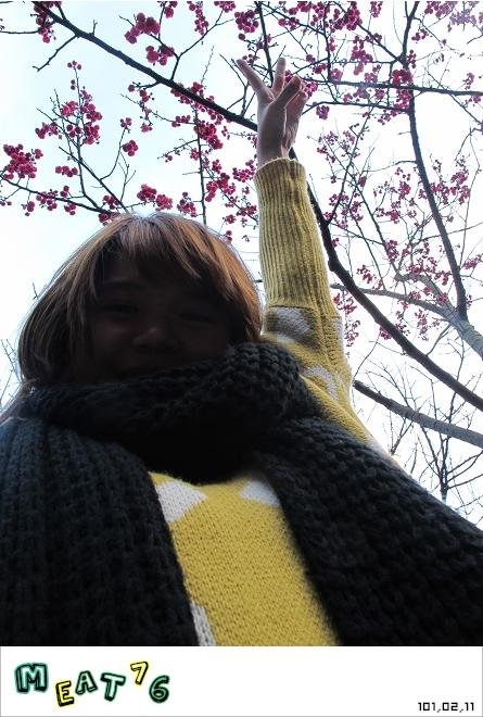 【遊記】陽明山國家公園|櫻花乍現在粉紅意境的花花世界15