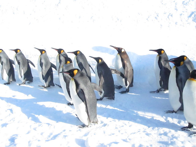 Penguin walk 2