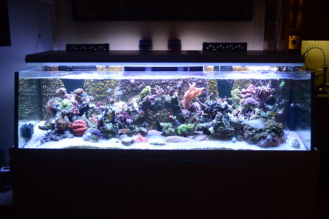 Luc's shallowreef tank 6896648326_fec0cfa18d_z