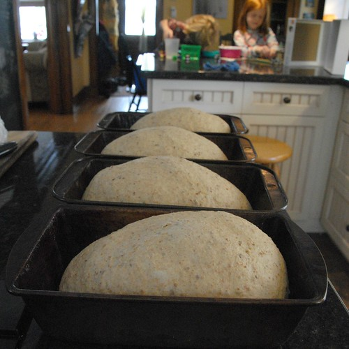 breaddoughrising