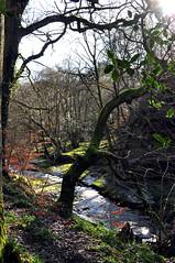 Sparkling river Gelt