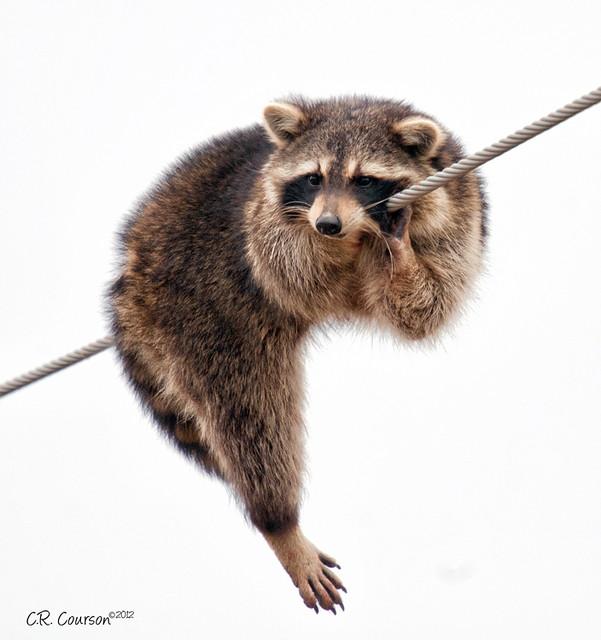 Hang On!!